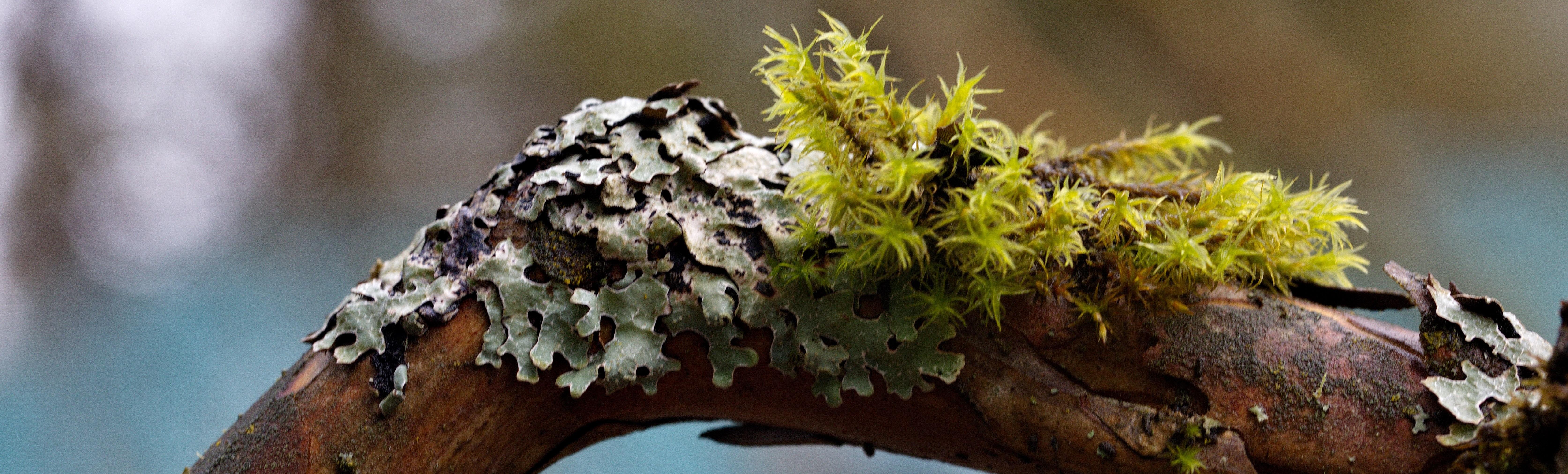 Lichens Workshop