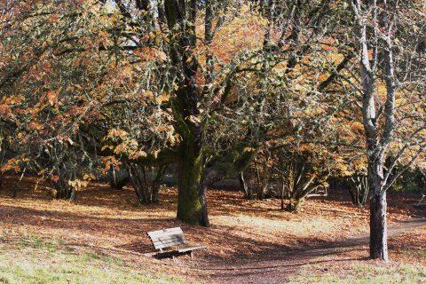 Membership at Hoyt Arboretum
