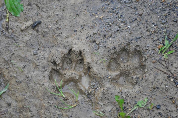 Wildlife Tracking Workshop