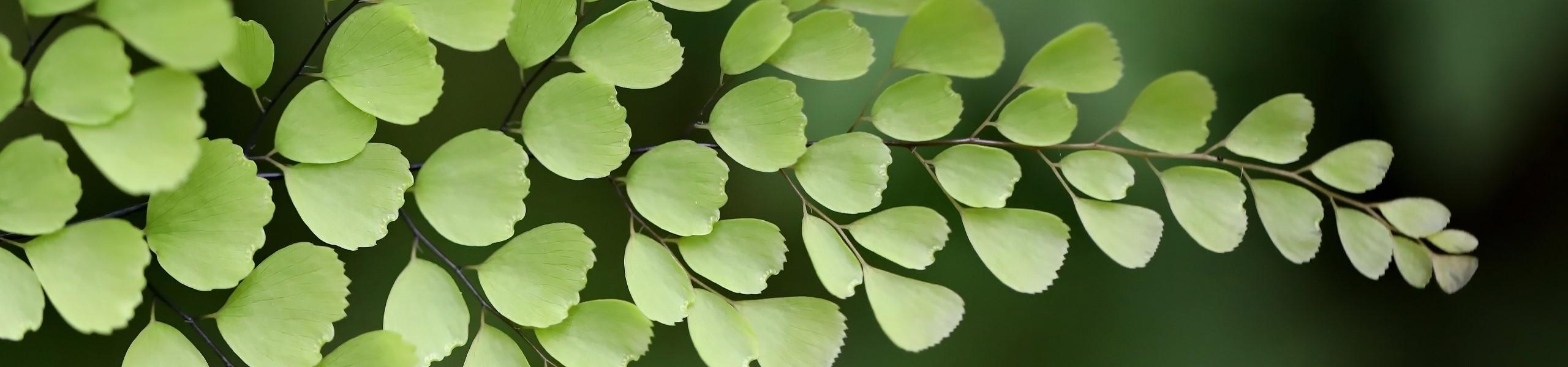 Ask an Expert! Fantastic Ferns at Hoyt Arboretum